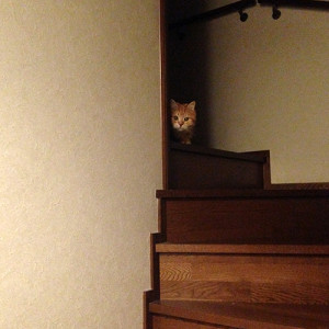 階段で遊んでるから邪魔しないでにゃ
