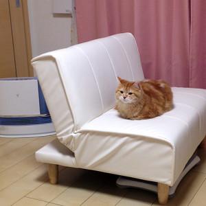 ソファーがお好き
