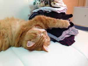 洗濯物にゃ~ん
